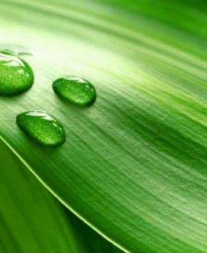 листен тор